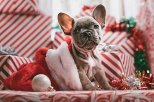 cagnolino Natale regalo